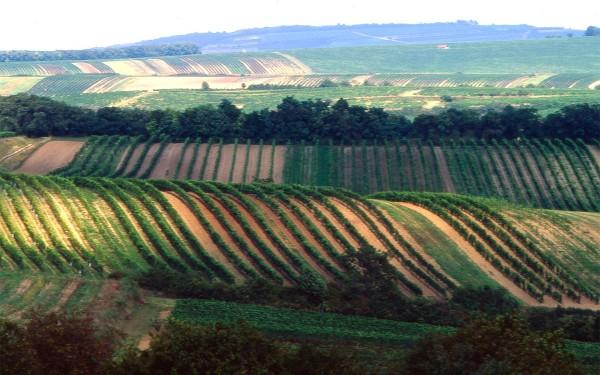 Weinviertel-Header